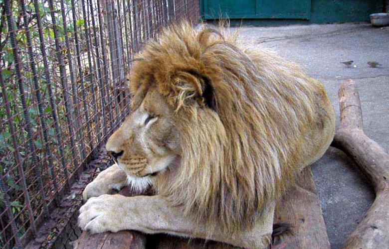 Зоопарк и «Поляна Сказок»