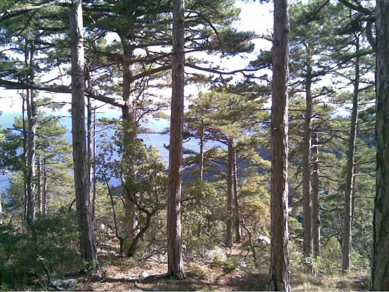 Горные леса и море - секрет секрет целебного воздуха ЮБК.