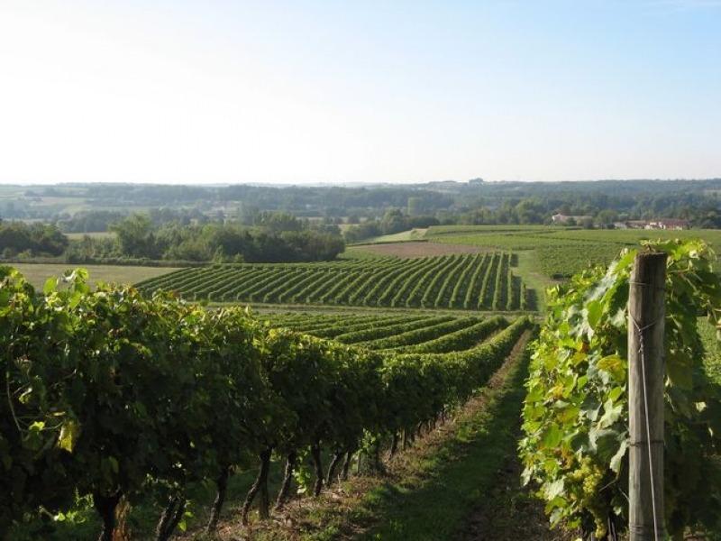 Виноградники Альминской долины