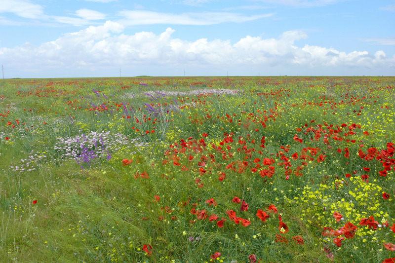 Крымская степь в июне