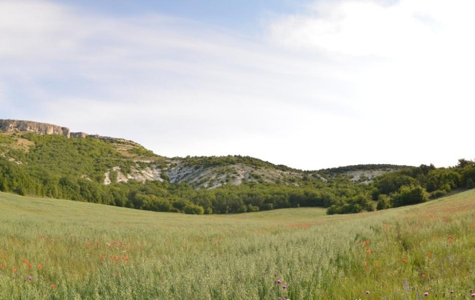 Растительность Альминской долины. Лесостепь