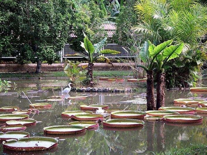 Достославный Ботанический сад