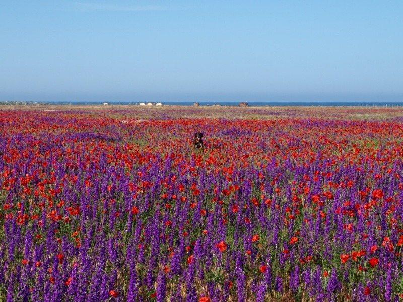 Весна в степном Крыму