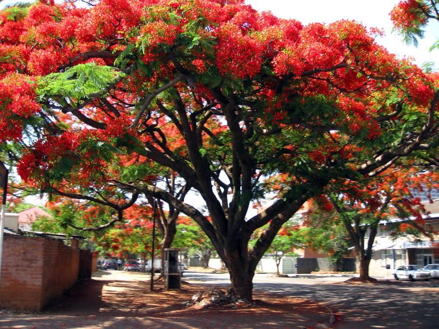 Экзотические деревья в Сочи