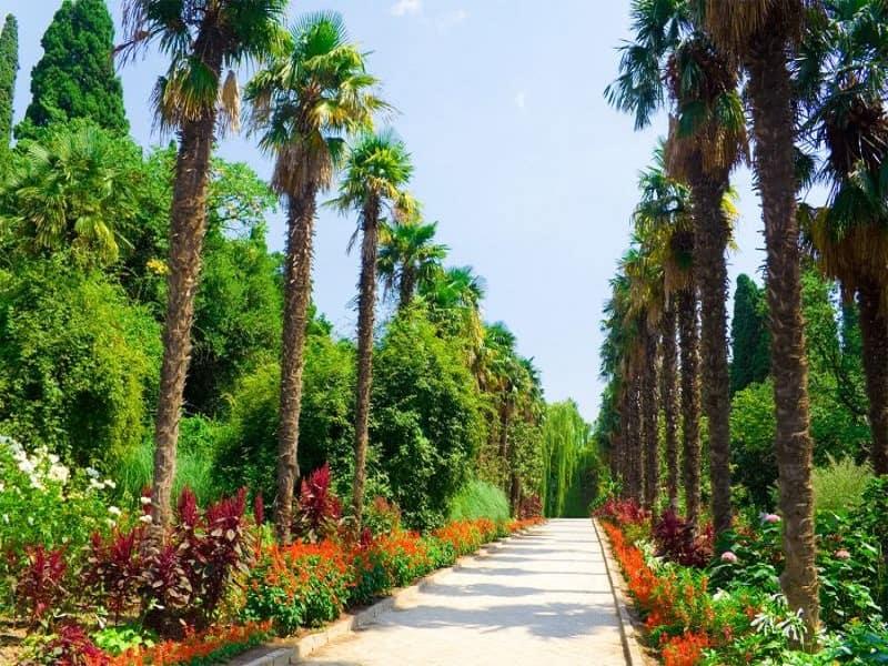 Аллея Ботанического сада