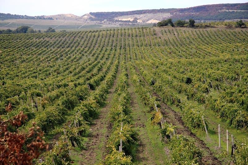 Виноградники Балаклавы