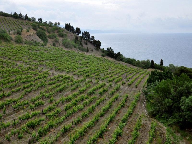 Виноградники восточной части ЮБК