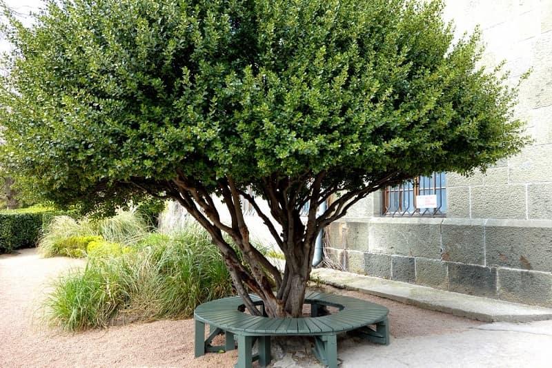 Дерево. Воронцовский Дворец