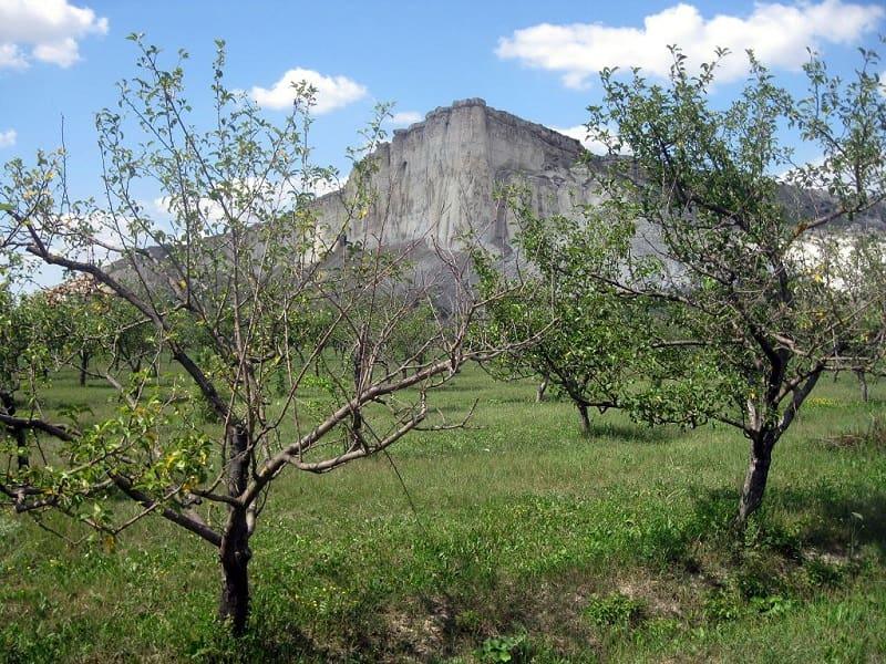 Фруктовые деревья на ЮБК