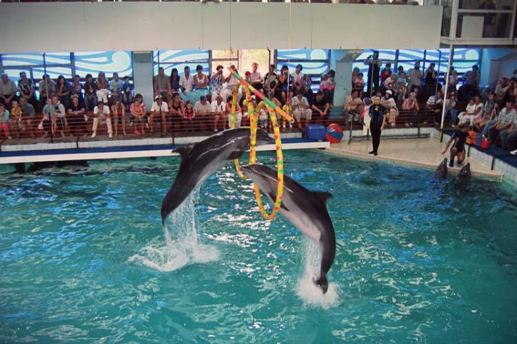 Дельфинарий геленджик